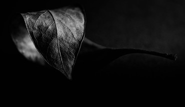 Leaves plants grayscale flora HD wallpaper