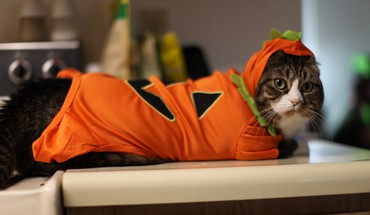 Kittys costume for halloween HD wallpaper