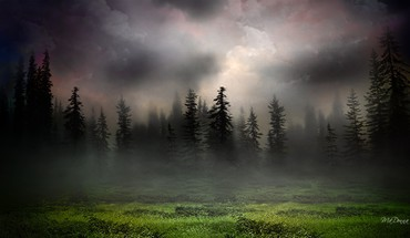Sunrise in foggy woods HD wallpaper