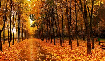 Trees wet path parks tile avenue autumn HD wallpaper