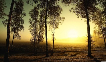 Sunrise on a birch grove HD wallpaper