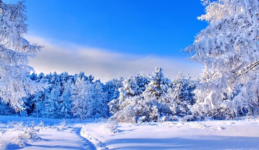Sunny winter day HD wallpaper