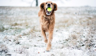 Animals balls dogs snow tennis HD wallpaper