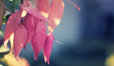Leaves macro nature pink HD wallpaper