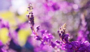 Nature flowers bokeh depth of field purple HD wallpaper