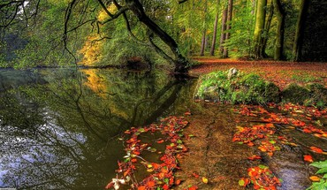 Forest lake at the start of autumn HD wallpaper