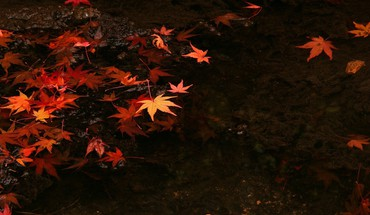 Water japan nature leaves HD wallpaper