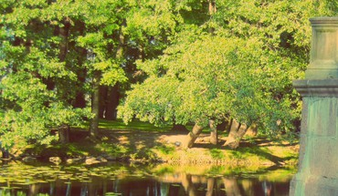 Green water nature trees summer ponds swamps lilypads HD wallpaper