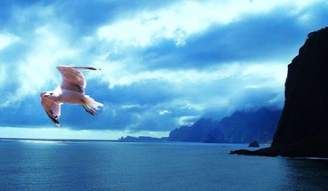 Flight in blue HD wallpaper