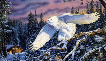 Forests owls paintings snow snowy owl HD wallpaper