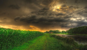 Corn fields hdr HD wallpaper