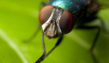 Animals fly insects iridescence macro HD wallpaper