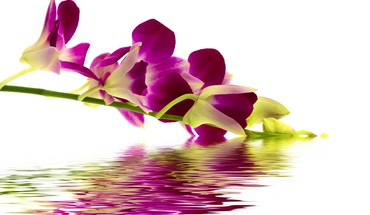 Reflection of beautiful flower HD wallpaper