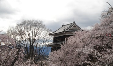 Japan castles cherry blossoms flowers sakura spring HD wallpaper