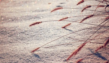 Snow spikelets HD wallpaper