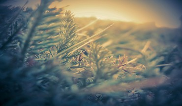 Closeup depth of field grass nature HD wallpaper