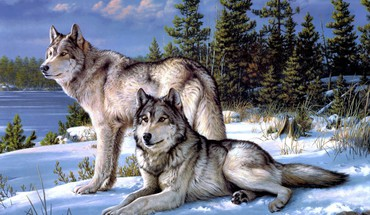 Wolves in snow HD wallpaper