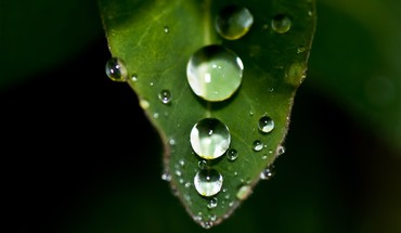 Dew drops green leaf HD wallpaper