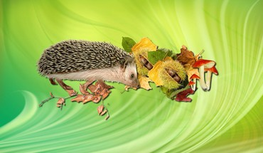 Adorable little hedgehog HD wallpaper