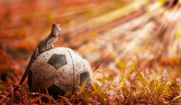Animals soccer lizards fussball balls football futbol futebol HD wallpaper