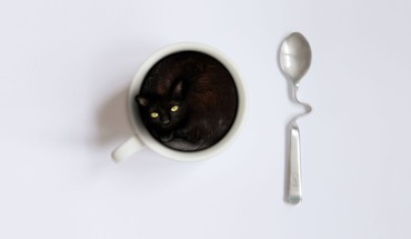 Animals cats coffee cups simple background spoons HD wallpaper
