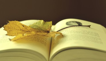 Leaf on a book HD wallpaper