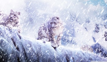 Leopardsinthesnow HD wallpaper