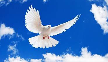 Birds animals skyscapes white dove HD wallpaper