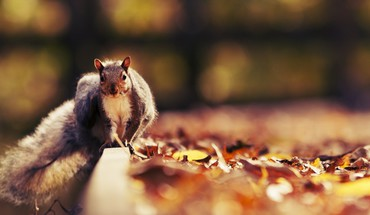 Animals leaves squirrels HD wallpaper