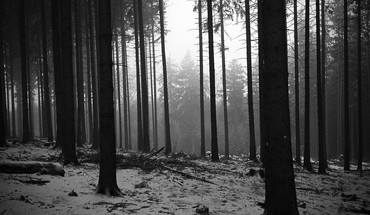 Black and white landscapes trees forest monochrome HD wallpaper