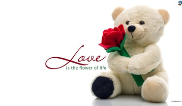Love bear HD wallpaper