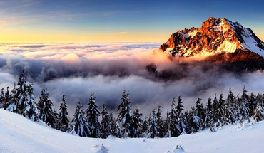 Winter fog HD wallpaper