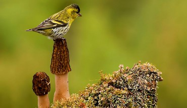 Bird on a mushroom HD wallpaper