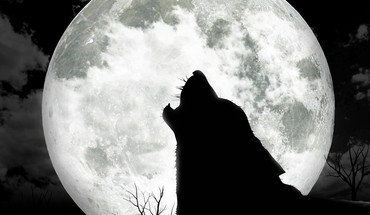 Moonwolf  HD wallpaper
