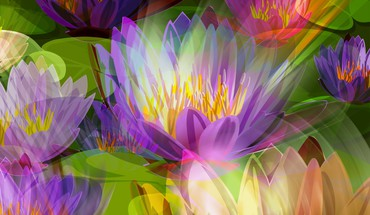 Lotus in my mind HD wallpaper