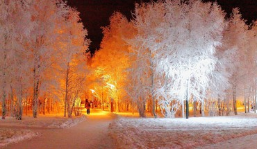 Lights in the forest winter time HD wallpaper