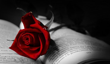 Book with red rose HD wallpaper