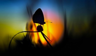 Butterfly sunset HD wallpaper