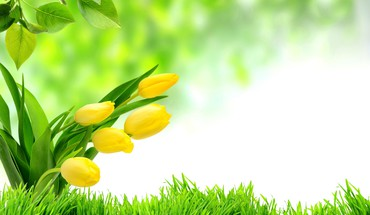 Spring freshness HD wallpaper