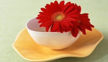 Red gerberas in white bowl HD wallpaper