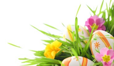 Easter eggs with primrose in grass HD wallpaper