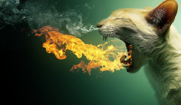 Cats fire photo manipulation HD wallpaper
