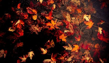 Nature autumn leaves fallen HD wallpaper