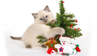 Christmas trees animals cats kittens pets HD wallpaper