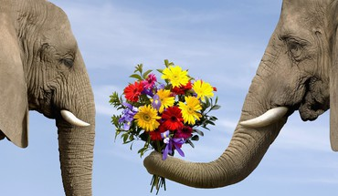 Love flowers animals elephants bouquet HD wallpaper