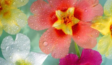Flowers multicolor nature plants water drops HD wallpaper