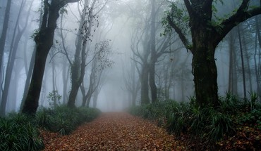 Gothic forest HD wallpaper