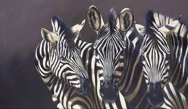 Zebras artwork HD wallpaper