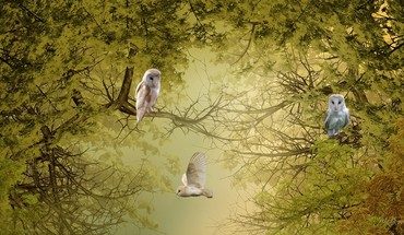 arbres Nature oiseaux hiboux  HD wallpaper