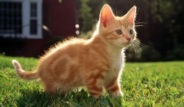 Kitten red HD wallpaper